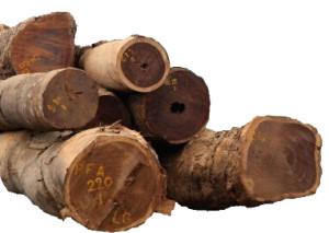 Classification du palissandre et de l'ébène de Madagascar